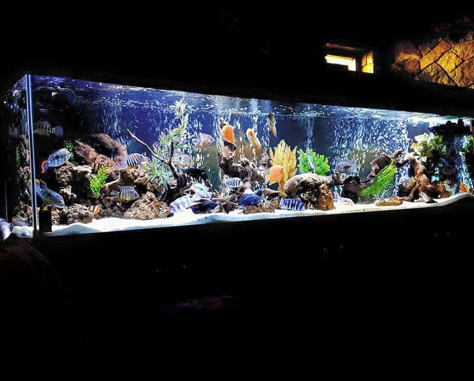Wazeers aquariums wazeers aquariums home for Black light for fish tank