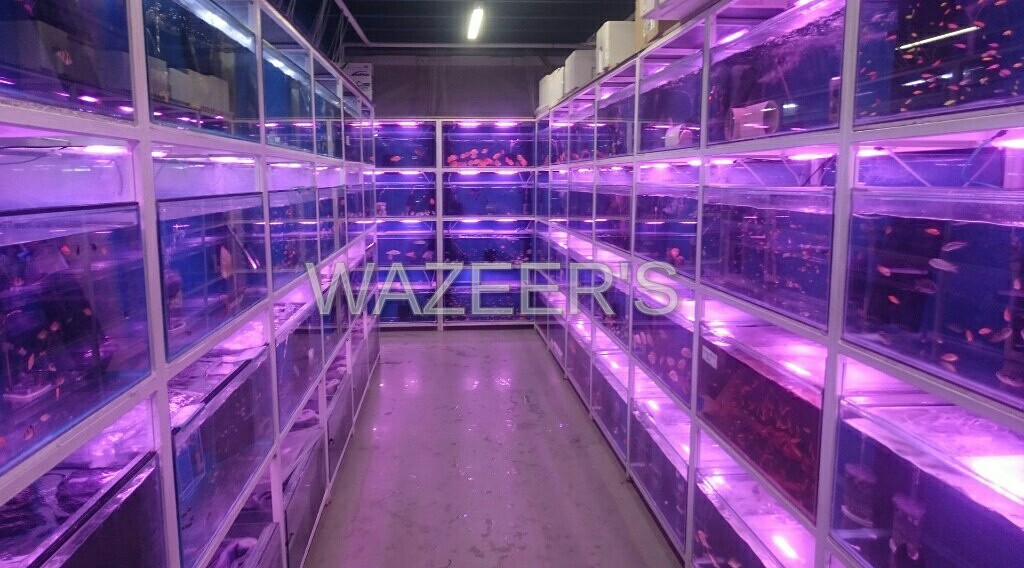 Magnificent Wazeers Aquariums Wazeers Aquariums Home Download Free Architecture Designs Scobabritishbridgeorg